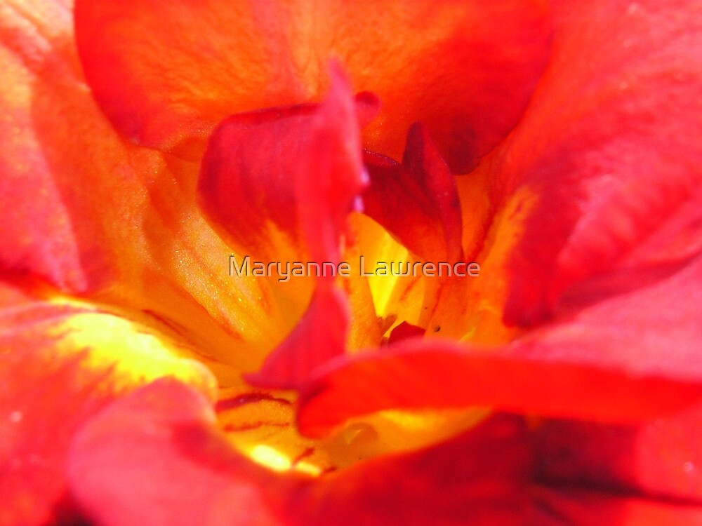 Freesia Fire by Maryanne Lawrence