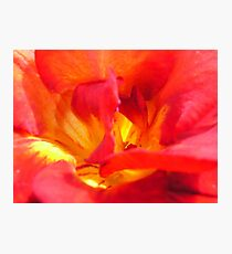 Freesia Fire Photographic Print