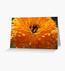 Shades of Orange Greeting Card