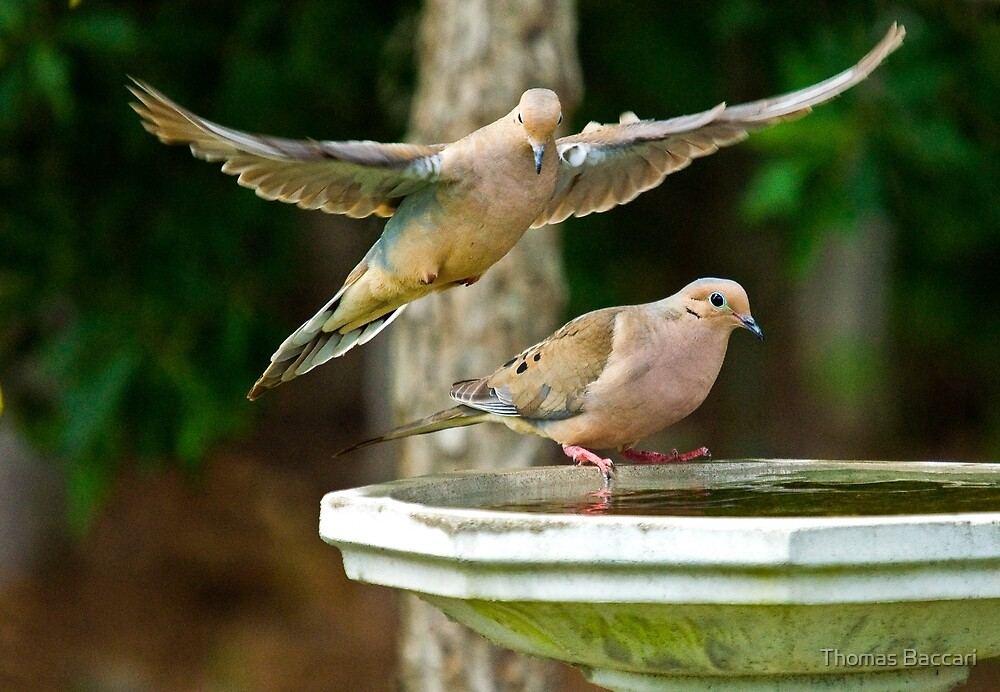 I've Got You Under My Wing by TJ Baccari Photography