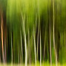 Trees by Martin Griffett