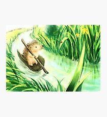 Hedgehog on a journey Photographic Print