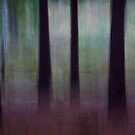 Pine woods by Martin Griffett