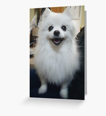 Gabe the Dog Greeting Card