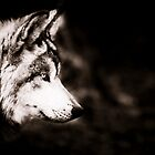Wolf by Beth Wold