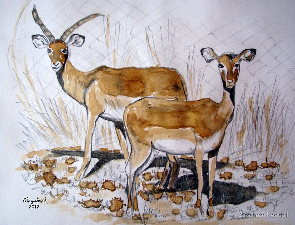 Impala by Elizabeth Kendall