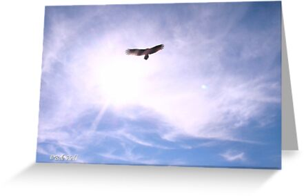 """""""Freebird""""... prints and products by Bob Hall©"""