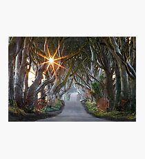 The Dark Hedges / County Antrim / Northern Ireland Photographic Print