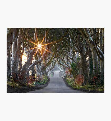 The Dark Hedges / County Antrim / Northern Ireland Photographic Print