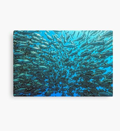 Splitted School of Jacks Canvas Print