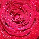 ~Misty Rose~ by Terri~Lynn Bealle
