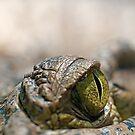 Crocodile's Eye by Henry Jager
