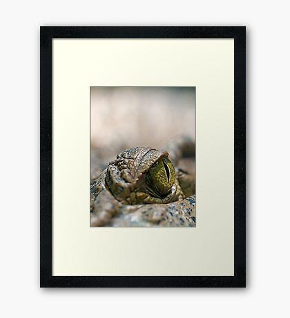 Crocodile's Eye Framed Print