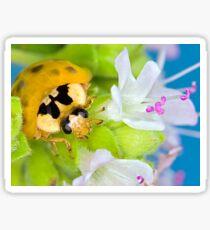 Ladybird - Ladybug - Marienkäfer - Glückskäfer III Sticker
