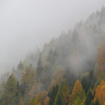 Misty woods by Saxifraga-Art