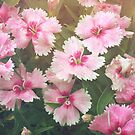 Little Pink Flowers by OLIVIA JOY STCLAIRE