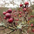 Winter Berries by Livvy Young