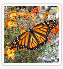 Butterfly display Sticker