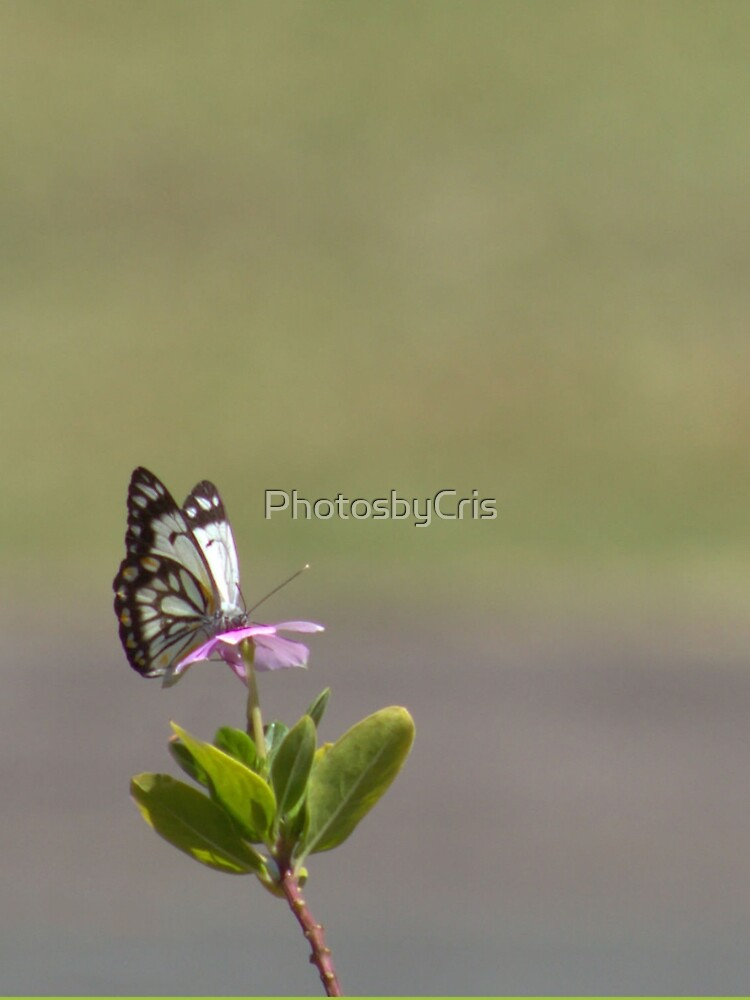 Butterfly by PhotosbyCris