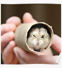 Winking Hamster Poster