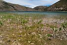 Lake Coleridge by Werner Padarin