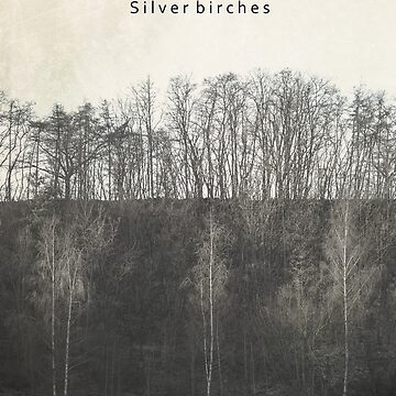 Silver birches by strut