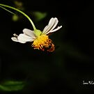 lonely little bee  by Jamie McCall