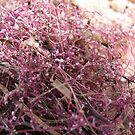 Pink Seaweed by Maryanne Lawrence
