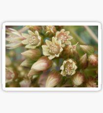 succulent flower Sticker
