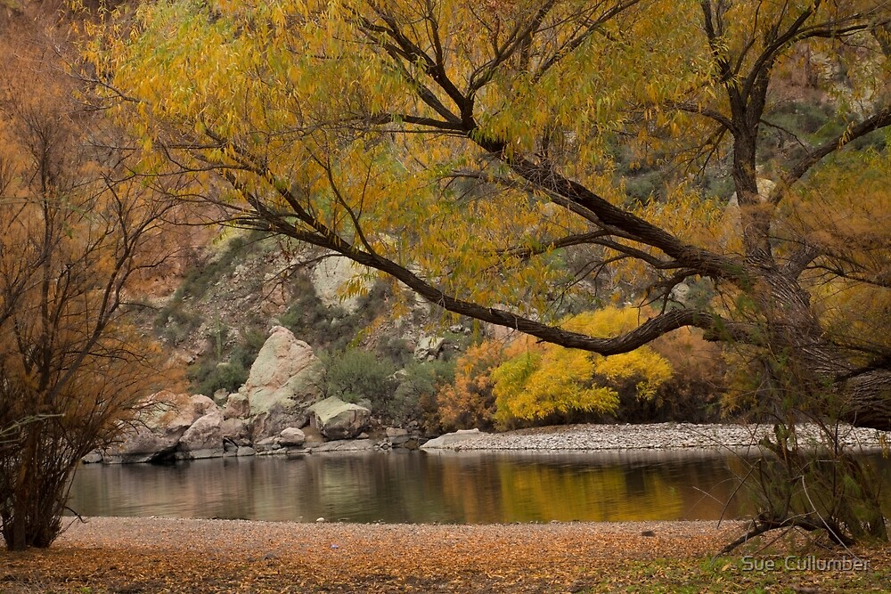Autumn along the Salt River by Sue  Cullumber