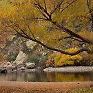 Autumn along the Salt River by Sue  Cullumber