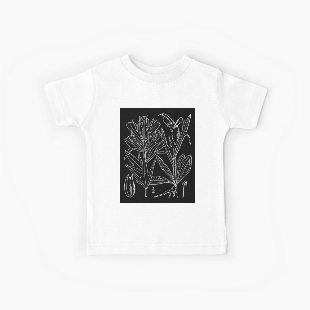 Britton And Brown Illustrated flora of the northern states and Canada 0407 Castilleja coccinea drawing Kinder T-Shirt