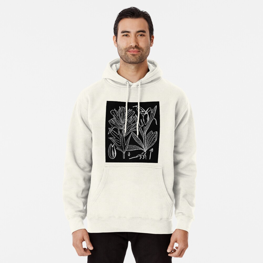 Britton And Brown Illustrated flora of the northern states and Canada 0407 Castilleja coccinea drawing Hoodie