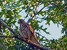 Broadwing Hawk by FrankieCat