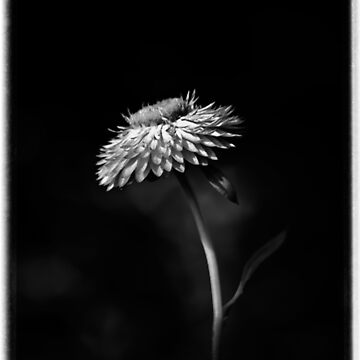 little flower by lucylucy