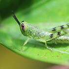 Little green grasshopper by AnnaKT
