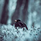Cold by PaperPlanet