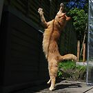 Ginger cat playing with string by turniptowers