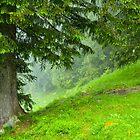 Hillside by metriognome