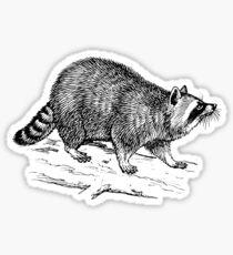 Raccoon drawing Sticker