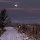 Moon Rise Melody by Gregory J Summers
