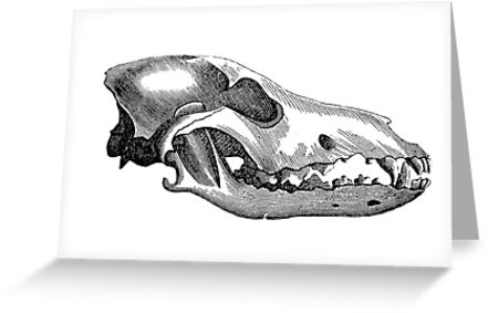 Canis lupus Skull by Nina McDonnell