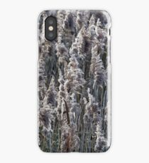 Old reed grass iPhone Case/Skin