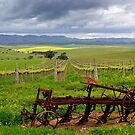 Springtime on the Vines by John Wallace