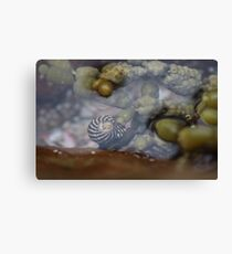 Seaside; Sea Snail Canvas Print