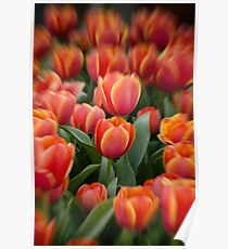Tulips Poster