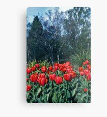 Kodachrome Tulips Metal Print