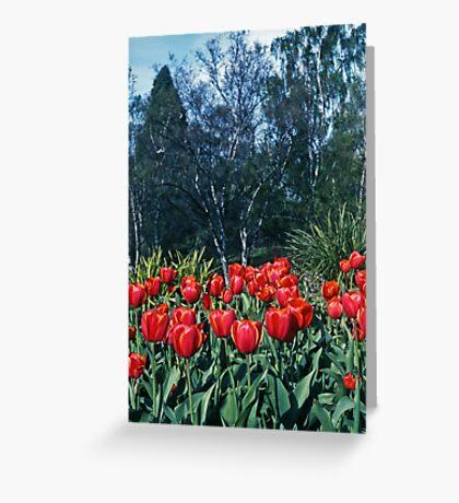 Kodachrome Tulips Greeting Card