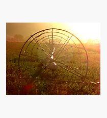 Sprinklers - Sunrise Photographic Print