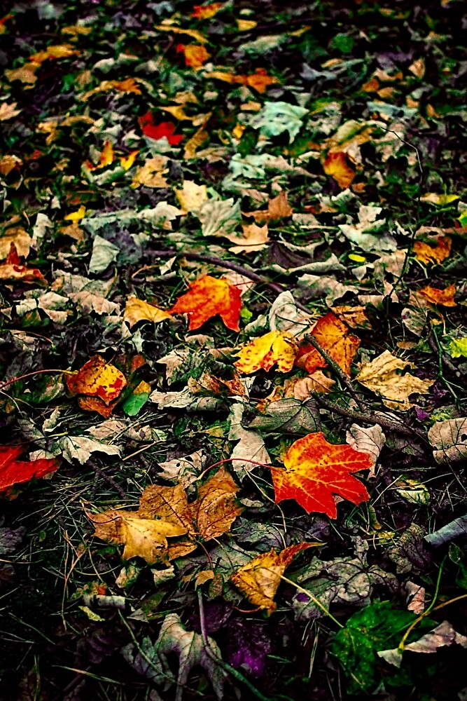 Autumn Leaves by Vicki Field